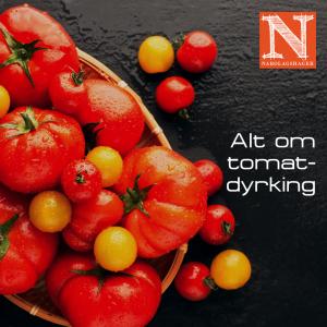 alt-om-tomat