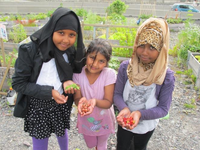 Ikhra, Momina og Khulud høster markjordbær i Bjørvika foto Maria S Bernt