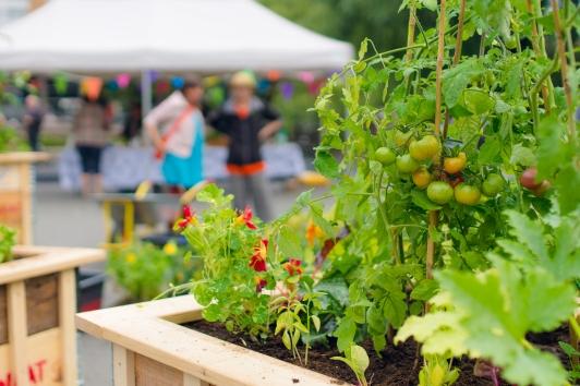Plantekasser med tomater og spiselige blomster på Vaterland foto Monica Løvdahl